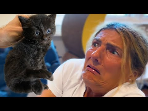 Person Who HATES Cats Meets Kittens