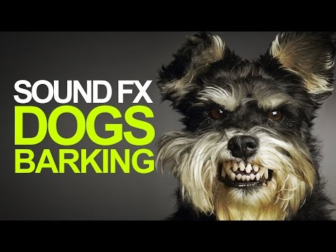 DOGS BARKING | Sound Effects [High Quality]