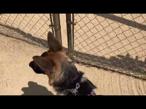The Boneyard - Culver City Dog Park Review