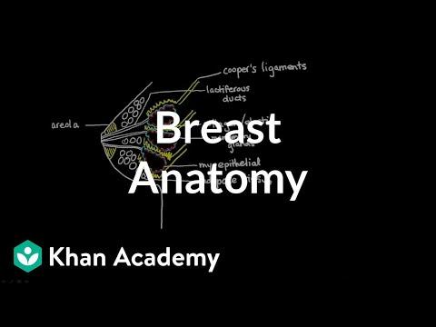 Stanford School of Medicine: Breastfeeding