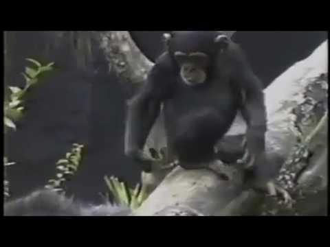 猴子被自己的手臭暈了!