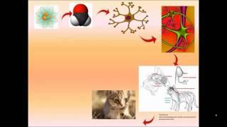 Explicación de un ejemplo de niveles de organización de los seres vivos.