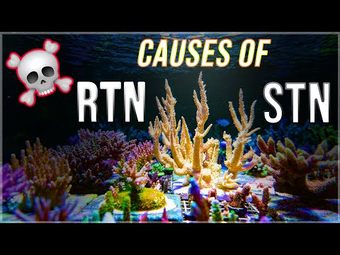 Why Acropora corals die in the reef tank | RTN STN