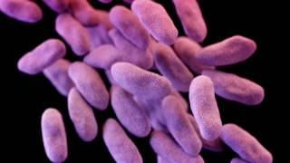 "The World Health Organization has drawn up a list of the drug-resistant bacteria that pose the biggest threat to human health.Top of the list are gram-negative bugs, such as E. coli, which can cause lethal bloodstream infections and pneumonia in frail hospital patients.The list will be discussed ahead of this summer's G20 meeting in Germany.The aim is to focus the minds of governments on finding new antibiotics to fight hard-to-treat infections.Experts have repeatedly warned that we are on the cusp of a ""post-antibiotic era"", where some infections will be untreatable with existing drugs.Common infections could then spread and kill.Dr Marie-Paule Kieny from the WHO said antibiotic resistance was reaching ""alarming proportions"" and yet the drug pipeline was ""practically dry"".""We are fast running out of treatment options. If we leave it to market forces alone, the new antibiotics we most urgently need are not going to be developed in time.""The WHO says there is a danger that pharmaceutical companies will develop only treatments that are easier and more profitable to make - the low-hanging fruit.The focus should be on clinical need instead, says the WHO.Tuberculosis was not included on the list because the search for new treatments for this infection is already being prioritised.Experts drew up the list by looking at the current level of drug resistance, global death rates, prevalence of the infections in communities and the burden the diseases cause on health systems.One of the infections at the top is a bacterium called Klebsiella that has recently developed resistance to a powerful class of antibiotics called carbapenems.The US recently reported the fatal case of a woman who caught this infection which could not be treated with any of 26 different antibiotics available to her doctors."