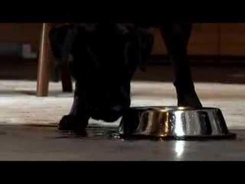 "2008 Gatorade Super Bowl Commercial ""Man's Best Friend"""