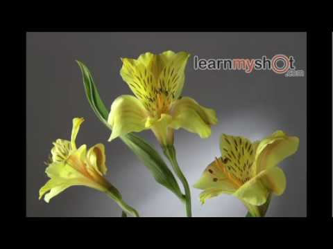 How to Photograph Flowers in  the Studio