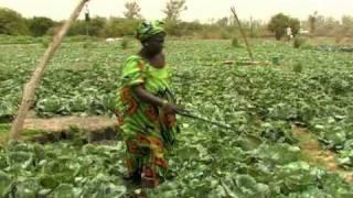 Video del Día Mundial de la Alimentación 2010
