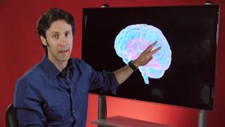 Your Brain is You: Meet Your Brain (Part 2 of 6)