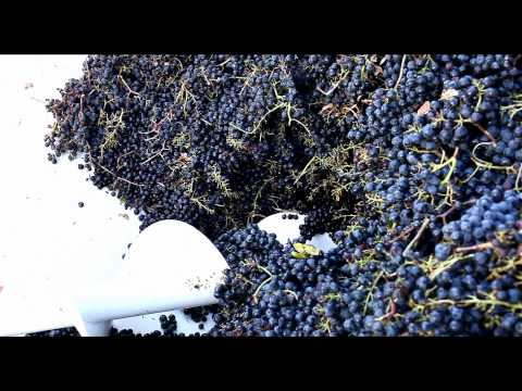 Video von Castello di Selvole