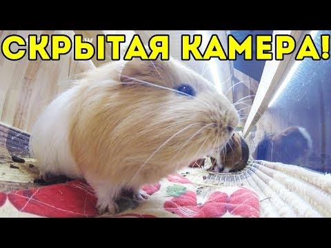 РЕАКЦИЯ НА СКРЫТУЮ КАМЕРУ / ВАЛИК ХУЛИГАН!