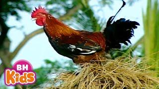 Con Gà Trống Ò Ó O, Con gà trống, Có cái mào đỏ chân có cựa. Gà trống gáy ò ó o. Nhạc Thiếu Nhi Hay Nhất:...
