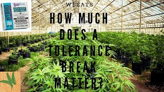 Experiment: How Much Does a Weed Tolerance Break Matter? Hint: A Lot by  Weeats Reviews