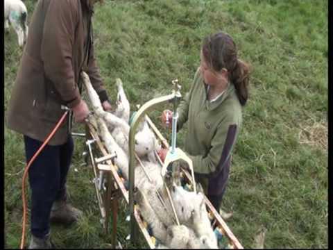 Vetmarker Lamb Marker Chute