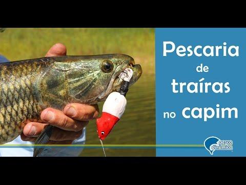 Pesca de traíras no capim