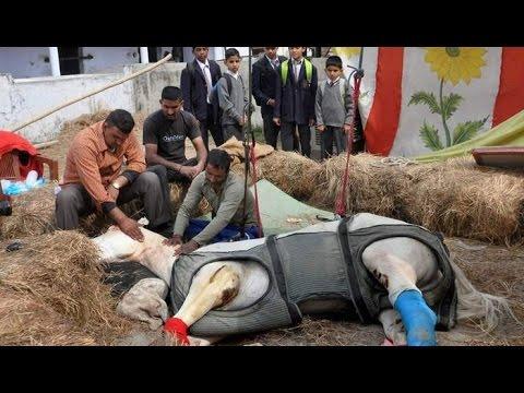 Police-Horse-Shaktiman-Injured-During-BJP-Protest-In-Uttarakhand-Dies