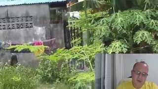 Minglanilla Philippines  City new picture : Lot for sale in Minglanilla, Cebu, Philippines