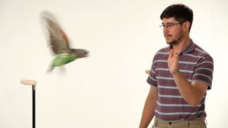 How to Teach Your Parrot to Fly