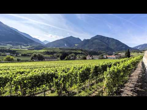 Discover the white wines of Alto Adige
