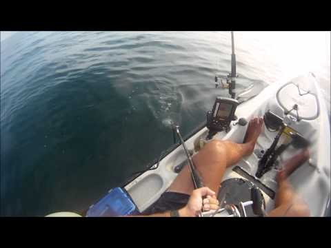 WATCH: Kayaker Fisherman Gets A Surprise Visit From A Shark