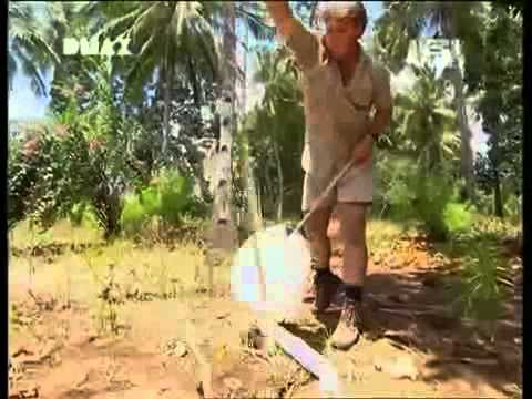 Kenia: Crocodile Hunter « Die schwarze Mamba » | [4 ...