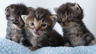 Rescuing Orphan Kittens from the Shelter