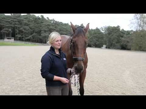 Meet Gemma Tattersall's top horse Arctic Soul [VIDEO]