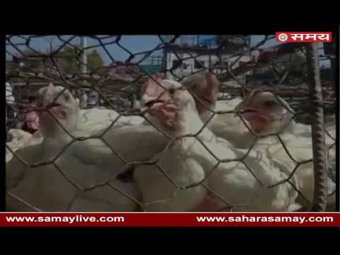 Increased prices of chicken in Kanpur due to illegal slaughter house closure in UP