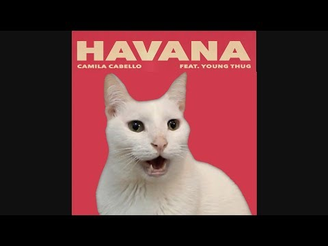 HAVANA - Camila Cabello by CATS | Despacito | Shape of you | + More BEST Hits - Cat Parody