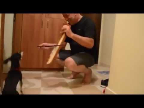 Kemençe ile Horon Tepen Köpek