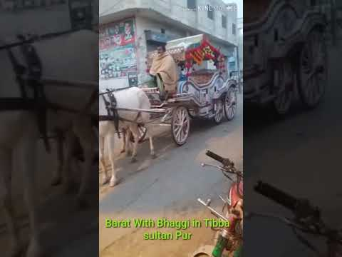 Bhaggi in barat | peradise marriage hall | Tibba sultanpur | Mueed Bhatti