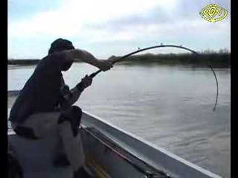 big - catching really Big catfish.