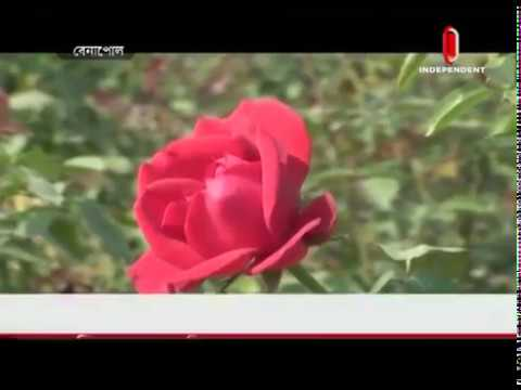 Benapole flower market gets a boost (15-12-18) Courtesy: Independent TV