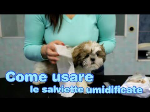 Toelettatura del Cane: Salviette umide e pettine, come usarli? - play dog