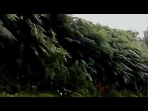 Ichtyor Tide- Wooise Perkage-Fur Immer
