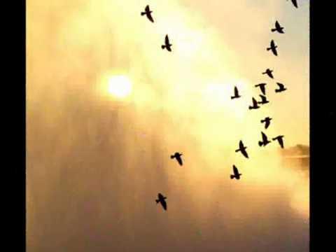 Video urdu poetry UDAAS SHAAMEIN, UJAAR RUSTAY......! [HQ].mp4 download in MP3, 3GP, MP4, WEBM, AVI, FLV January 2017