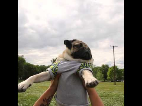 MUST SEE: Doug the Pug and His AWESOME Mother's Day Tribute