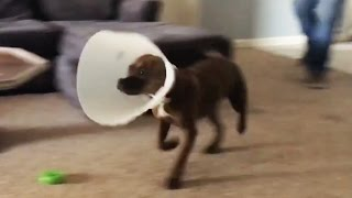 Best Animal Fails 2017 [Funny Pets] Video