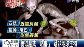 人腦長尾巴疑外星人木乃伊揭密