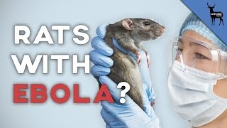 Can Rats Carry Ebola?