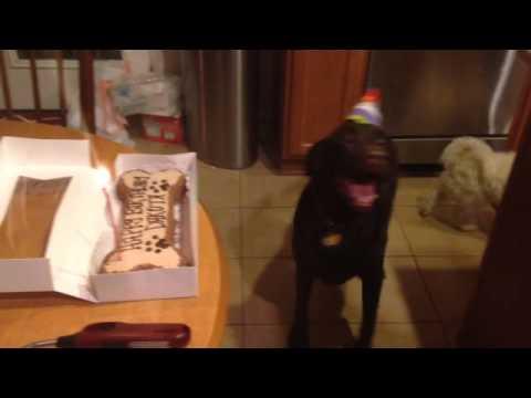 La enorme felicidad de este perro cuando le cantan el Happy Birthday