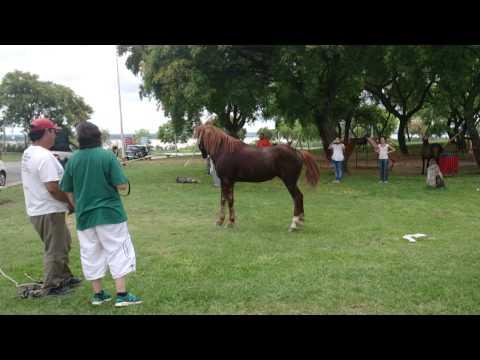 Liberan a un caballo que fue utilizado para tirar de un carro toda su vida, atentos a su reacción