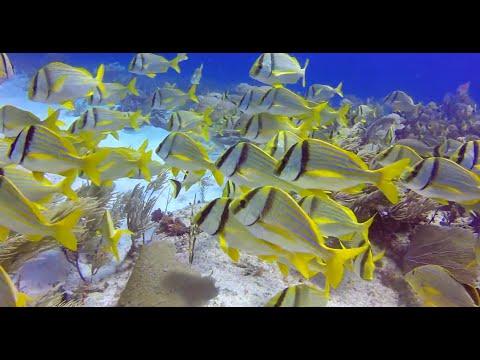 Scuba Diving with Wet Set Diving Adventures, Puerto Morelos