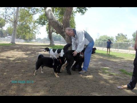 Video Dog Park  part 1 2015 download in MP3, 3GP, MP4, WEBM, AVI, FLV January 2017