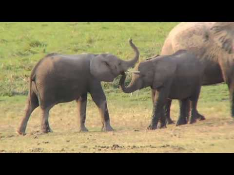 safari - A video showing the highlights of a 10 day safari in the Masai Mara, Aboseli and Samburu National parks, Kenya. This video is over an hour long but there are...