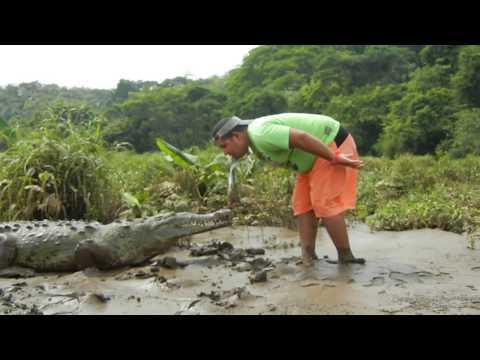 竟然有人敢這樣餵鱷魚