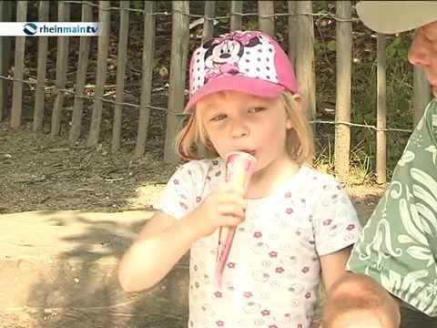 Fasanerie in Wiesbaden - ein wunderschönes Erlebnis im Wiesbadener Tierpark