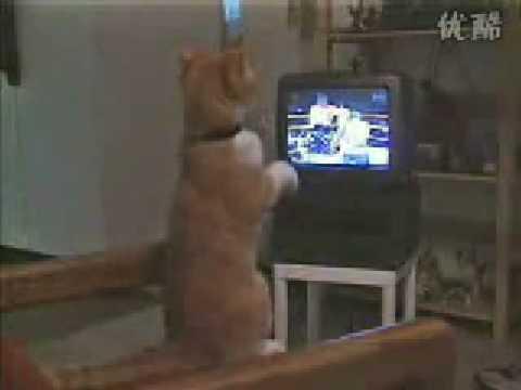 暴笑貓咪看電視練拳擊