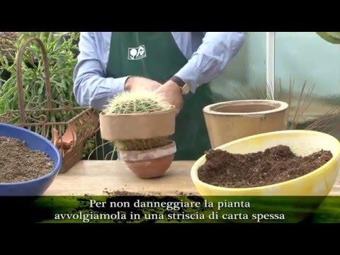 come invasare le piante grasse