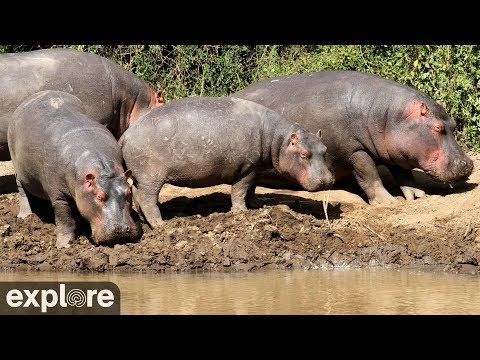 Live-Cam: Wildtiere im Mpala Research Center (Kenia ...