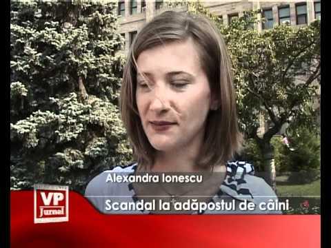 Scandal la adapostul de caini